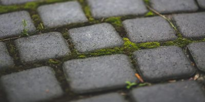 Walkway with moss and pavers